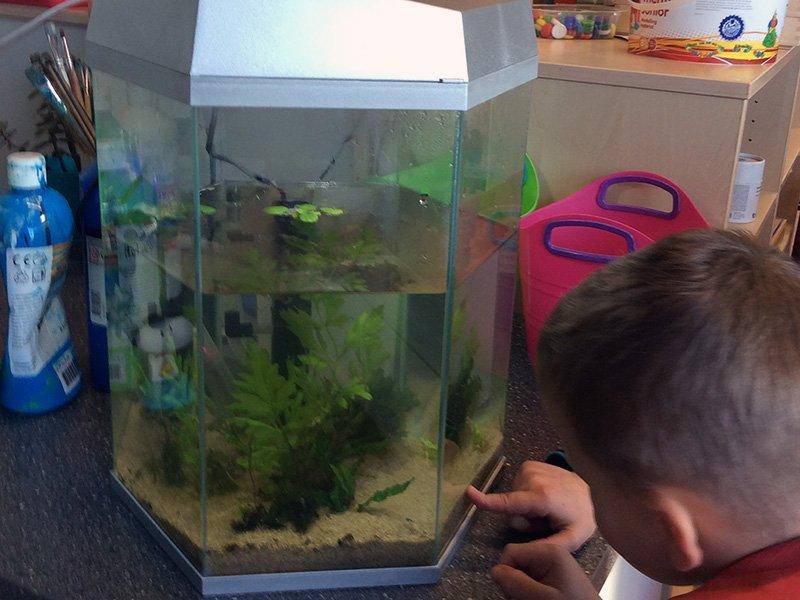 Themahoek inrichten door Wendy - Juf Bianca - de garnaaltjes en visjes in het aquarium
